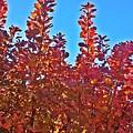 Autumn Reds  by Jo-Ann Hayden
