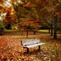Autumn Splendors by Jessica Jenney