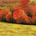 Autumn Splendor by Mary Tuomi