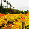 Autumn Vines by Douglas Barnard