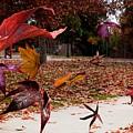 Autumn Wind by Richard Gordon