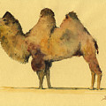 Bactrian camel by Juan  Bosco