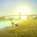 Baker Beach Dog Playing by Benny Marty