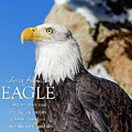 Advice From A Bald Eagle by Teri Virbickis