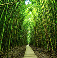 Bamboo Forest by Jamie Pham