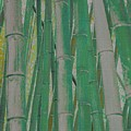 Bamboo by Viktor Savchenko