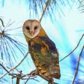 Barn Owl Beauty by Craig Corwin