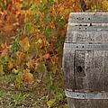 Barrel by Brandon Bourdages