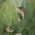 Bass On The Bottom by Audrey Bunchkowski