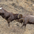 Battering Rams by Jim Garrison