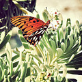 Beach Butterfly by Chris Andruskiewicz
