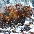 Bear by Luke  Clarkson