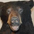Bear by Lynn Jung