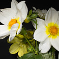 Beautiful Autumn White Flowers by Gergana Chakalova