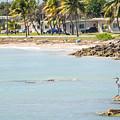 Beautiful Beach And Ocean Scenes In Florida Keys by Alex Grichenko