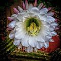 Beautiful Cactus by Robert Bales