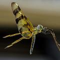 Beautiful Dragonfly by Wolfgang Stocker