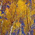 Beautiful Fall Season Nature Renews Itself  Theme Green Trees Reaching For The Sky  Save The Environ by Navin Joshi