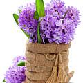 Beautiful Hyacinths by Natalia Klenova