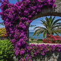 Beautiful Ischia by Andrey Bo