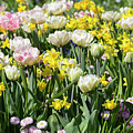 Beautiful Spring Flowers by Louise Heusinkveld