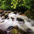 Beautiful Stream In Western Ghats by Vishwanath Bhat
