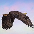 Beauty In Flight by Deborah Benoit