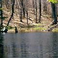 Beaver Pond by Stephanie Moore