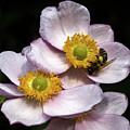 Bee At Work by Sergej Juganov