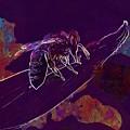 Bee Honey Bee Apis Insect Flower  by PixBreak Art