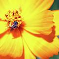 Bee Orange by Mary Haber