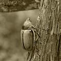 Beetle On A Log by Robert Hamm