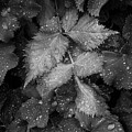 Bellevue Botanical Garden Leaves 6395 by Bob Neiman