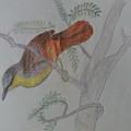 Bird by JITENDRA Verma