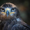 Bird Of Prey by FL collection