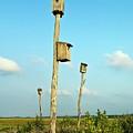 Birdhouses In Salt Marsh. by John Greim