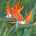 Birds Of Paradise by Larry Geyrozaga