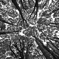 Black And White Nature Detail by Rodrigo Kaspary