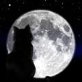 Black Cat And Full Moon by Nina Ficur Feenan