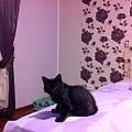 Black Cat by Daniela Buciu