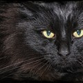 Black Cat by Joyce Baldassarre