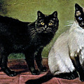 Black Manx And Siamese Cats by W Luker Junior