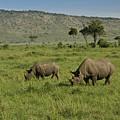 Black Rhinos by Michele Burgess
