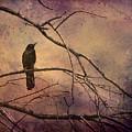Blackbird 2 by Christine Hauber