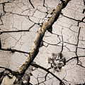 Blair Cracked Mud 1685 by Bob Neiman