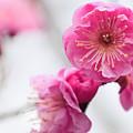 Blossom by Dorothy Binder