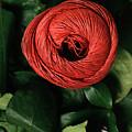 Blossom by Stefania Levi