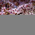 Blossoms by Tina Meador