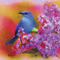 Blue Bird In The Lilac's by Robert Fohr