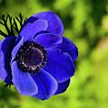 Blue Bonnet by Trish Tritz